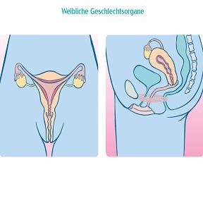 Nackt weibliche genitalien Keine Lust